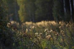 Wilde aard van Rusland in de zomer Royalty-vrije Stock Fotografie