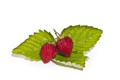 Wilde aardbeien stock foto's