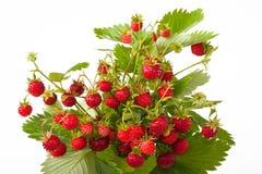 Wilde aardbeien Stock Afbeelding