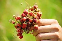Wilde aardbeien 2 Royalty-vrije Stock Afbeeldingen