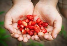 Wilde aardbeien in kinderenhanden royalty-vrije stock afbeeldingen