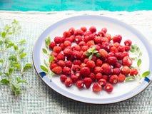 Wilde aardbeien op een plaat Hoekmening Royalty-vrije Stock Foto