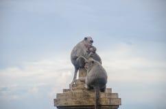 Wilde Affen Stockbild