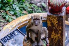 Wilde Affen in Kuala Lumpur; Malaysia Stockbild