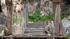 Wilde Affen, welche die Banane sitzt auf einer Brücke essen Lizenzfreie Stockfotos