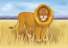 Wilde Afrikaanse leeuw in savanne tussen bergen Stock Foto