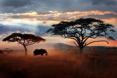 Wilde Afrikaanse olifant in de savanne Serengeti nationaal park Het wild van Tanzania royalty-vrije stock foto's