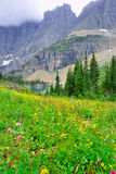 Wilde alpine Blumen auf der Glacier Nationalpark-Landschaft Stockfotos