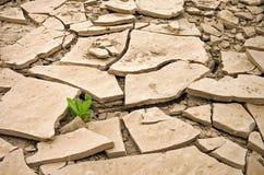 Wilde Anlage, die in einem gebrochenen trockenen Boden wächst Stockfotografie