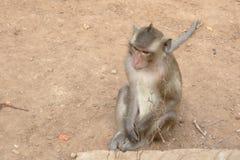 Wilde apen op aapeiland Royalty-vrije Stock Afbeeldingen