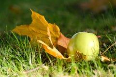 Wilde appelboom royalty-vrije stock afbeelding