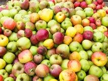 Wilde appelen stock afbeeldingen