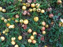 Wilde appelen op het gras Royalty-vrije Stock Foto