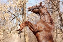 Wilde arabische Pferderückseiten Stockfoto