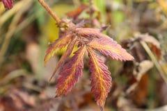 Wilde as met groene, rode en gele bladeren, de herfst Russische aard Royalty-vrije Stock Foto's