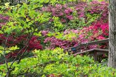 Wilde Azalea Flowers royalty-vrije stock foto's