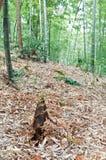 Wilde Bambusschosse Stockbild