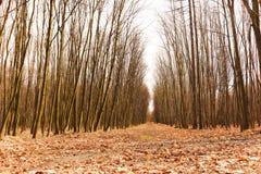 Wilde Baumlandschaft nahe Ostrava, Tschechische Republik stockfotos