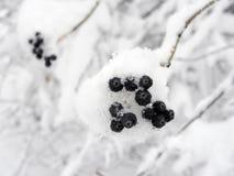 Wilde Beeren im Schnee Lizenzfreies Stockfoto
