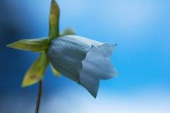 Wilde bellflower en hemel royalty-vrije stock foto
