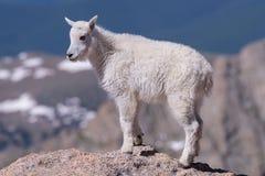 Wilde Berggeiten van Colorado Rocky Mountains royalty-vrije stock foto