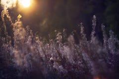 Wilde Beschaffenheit von Russland im Sommer Stockbild