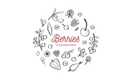 Wilde Bessen en vruchten vectorreeks De framboos, de Kers, de aardbei, de braambes en andere zomer oogsten getrokken Hand vector illustratie