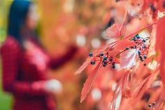 Wilde bessen meisje op de herfst vage achtergrond stock foto