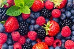 Wilde bessenaardbeien, bosbessen, braambessen, frambozen - Close-upfoto Stock Afbeeldingen