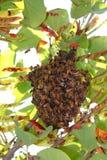 Wilde Bienen Lizenzfreies Stockfoto