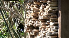 Wilde Bienen, die vor Insektenhotel f?r alleinen wilden Bienenschutz fliegen Osmia-bicornis Bienen stock video
