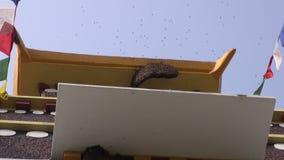Wilde bij op boeddhistische tempel in Nepal stock video