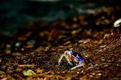 Wilde bijenbijenkorf Royalty-vrije Stock Afbeeldingen