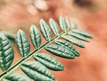 Wilde Blätter Stockbilder