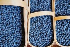Wilde Blaubeeren an einem Landwirtmarkt lizenzfreie stockfotos