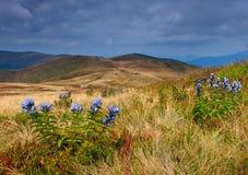 Wilde blaue Blumen im Vordergrund im Gebirgstal Stockbilder
