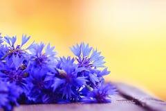 Wilde blauwe bloemen Royalty-vrije Stock Afbeeldingen