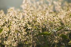 Wilde bloem. Stock Foto's