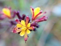 Wilde bloem Stock Afbeelding