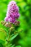 Wilde bloem Royalty-vrije Stock Foto