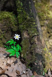 Wilde bloem Royalty-vrije Stock Fotografie