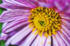 Wilde bloem in aard met bloemblaadjes stock illustratie