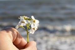 Wilde bloem in de hand Royalty-vrije Stock Afbeeldingen