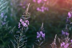 Wilde bloem in de lente royalty-vrije stock afbeeldingen