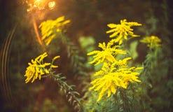 Wilde bloem en bokeh Royalty-vrije Stock Fotografie