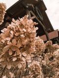 Wilde bloem met cabines royalty-vrije stock fotografie