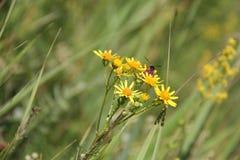 Wilde bloem met insect Royalty-vrije Stock Foto's