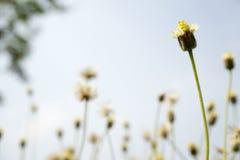 Wilde bloem met onduidelijk beeldachtergrond Royalty-vrije Stock Afbeeldingen