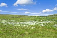 Wilde bloem op een rand stock fotografie
