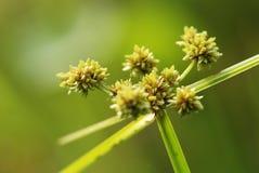 Wilde bloem op het gebied Stock Afbeelding